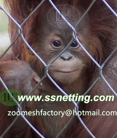 Steel wire rope mesh is an ideal zoo animal netting mesh, bird netting