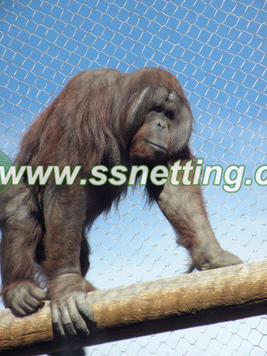 Gorilla cage fence is a many years ago project in Beijing zoo.jpg