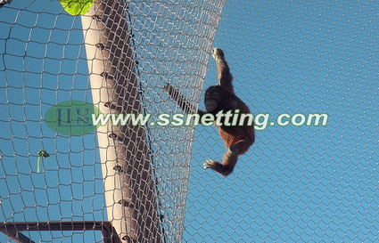 Stainless steel wire rope zoo mesh supply for Black-capped Capuchin fence, Cebus apella enclosure